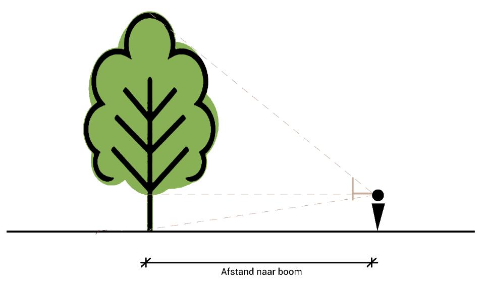 Schaduw boom berekenen